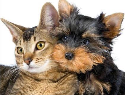 Comprar Alimentos para mascotas