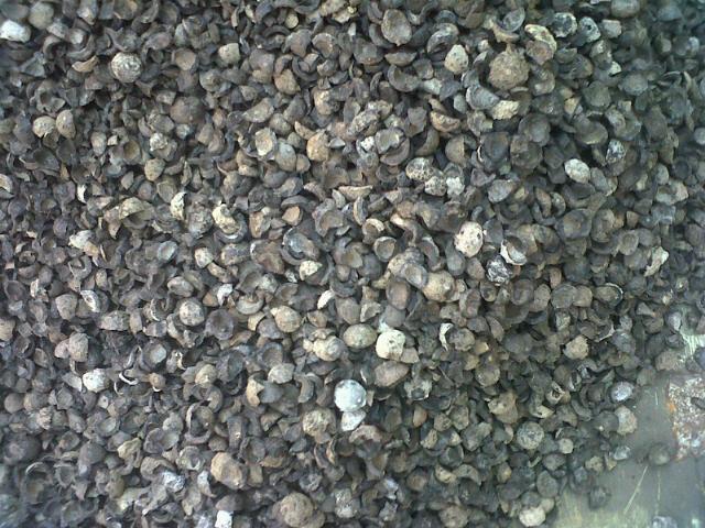 Comprar Carozo de coco (materia prima para carbon activado)