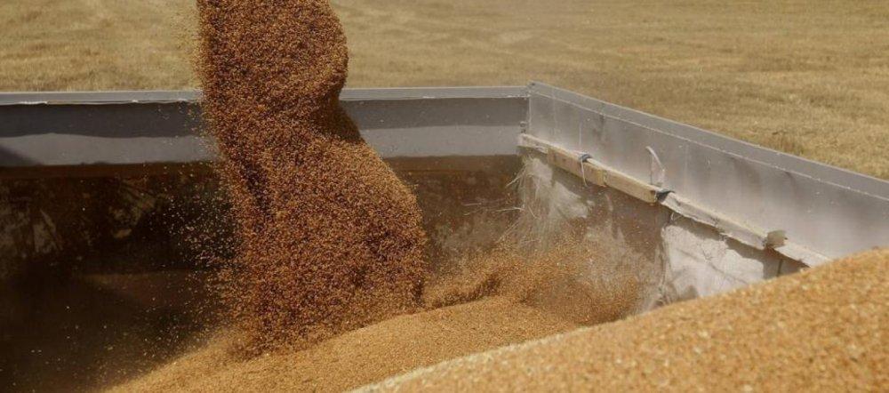 Comprar Soja GMO#41 Glicinemax