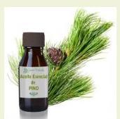 Pine tree essential oils