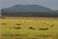 Granjas de agricultura