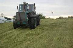 Silos para harina