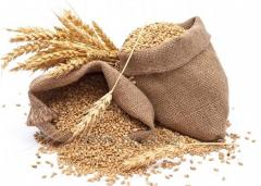 Trigo/ Wheat