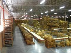 Produccion del tabaco